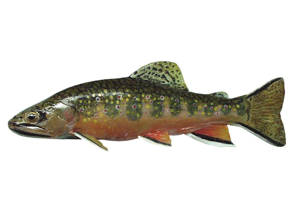 Index of biologie tiere fische for Heimische fische